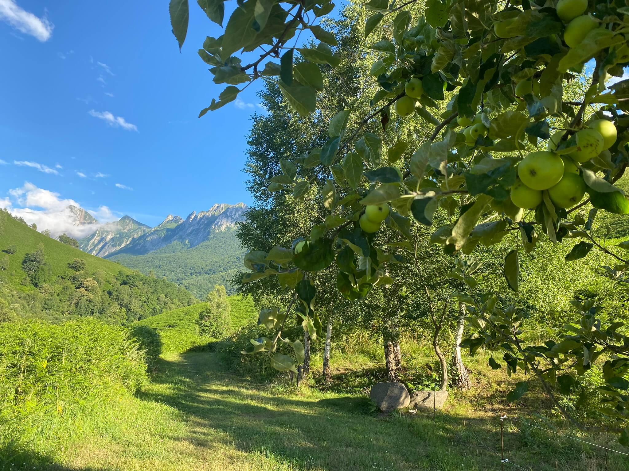 À la fin de l'été ou au début de l'automne, vous pourrez déguster quelques pommes sur le balcon nord du Poey